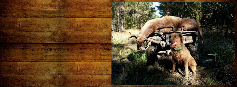 nc deer hunting guides