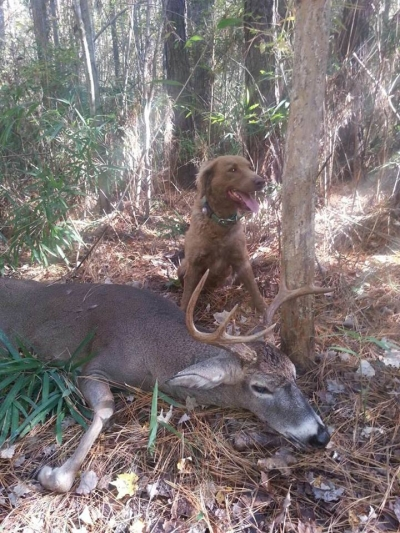 Tracking down that big North Carolina buck